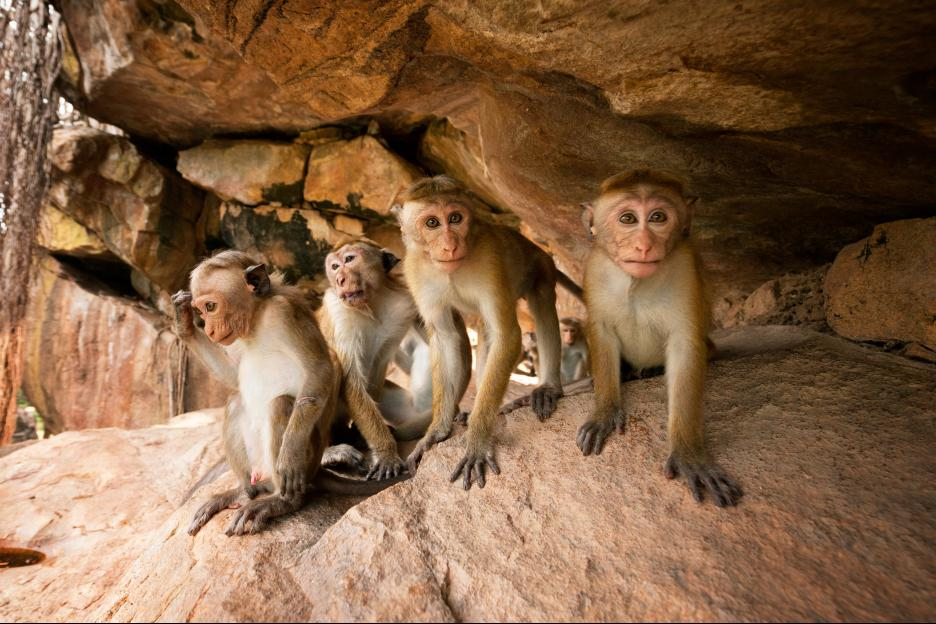 Disneynature's MONKEY KINGDOM Movie Review and Activity Pack