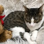 5 Reasons to Visit a Cat Cafe