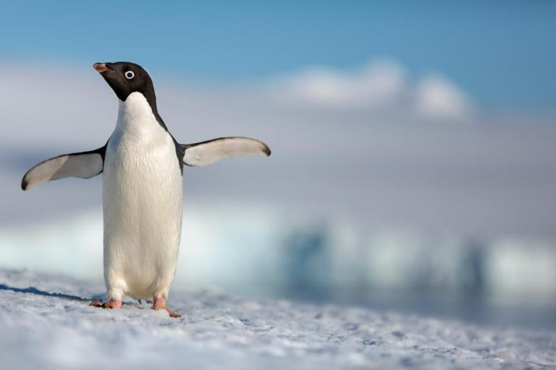 Disneynature's PENGUINS Movie Review